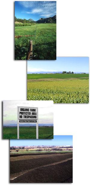 Land/Farms