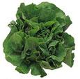 Buy Lettuce