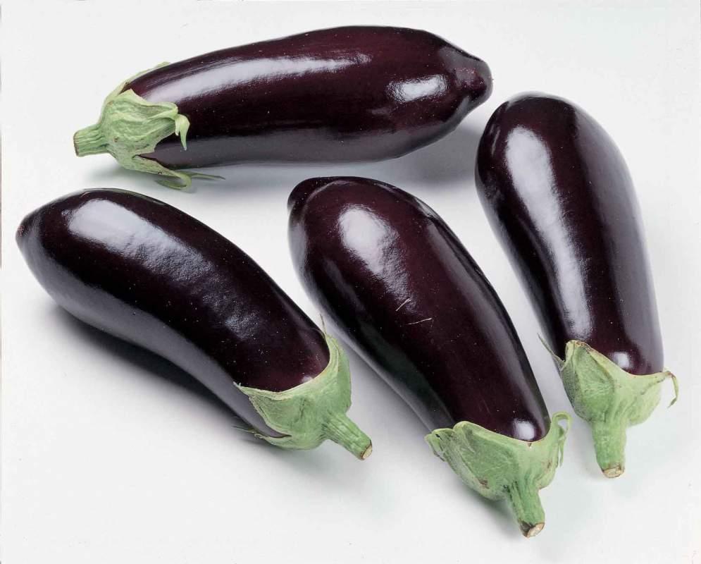 Buy Santana Eggplant