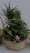 10 Inch Bamboo Basket w/Handle