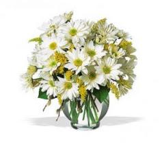 Daisy Cheer Bouquet TF58-3