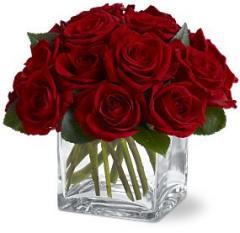 12 Rose Contempo