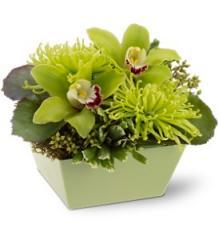 Go Green Floral Arrangement TFWEB200