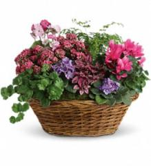 Simply Chic Mixed Plant Basket T97-1A