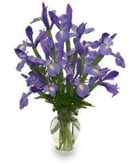 Fleur-De-Lis Iris Bouquet