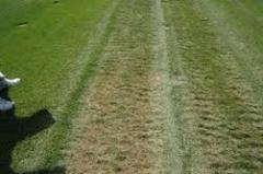 E Z Green GLSR Perennial Ryegrass Blend Grass