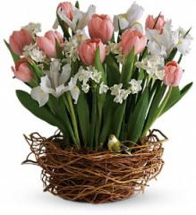 Tulip Song Bouquet T143-1A