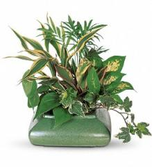 Small Garden Dish Plant T212-3A