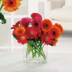 Glorious Gerbera Bouquet #EV 30-12