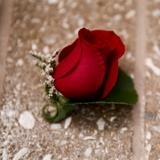 Man's Rose Boutonniere