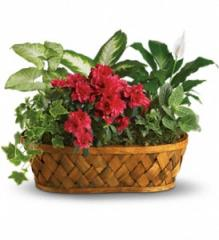 Plants Galore Basket