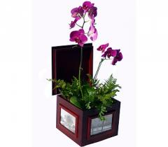 Cherry Photo Box with Orchid