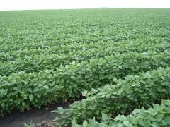 Organic soybean products
