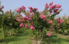 Tuskegee Flowers