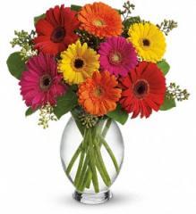 Teleflora's Gerbera Brights Bouquet T156-1A