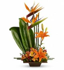 Teleflora's Exotic Grace Floral Arrangement