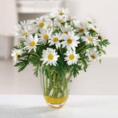 Daisy Daze Bouquet