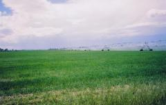 Profitable Idaho Farmland
