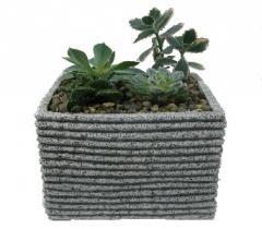 Delightful Succulent Garden Plant EFDS12B