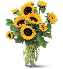 Shining Sunflowers TF66-1
