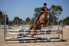 Arabian Warmblood, gelding, 16.1hh, fantastic all