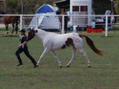 Quiet 10yr old QHx Paint Mare - Every Kid Loves