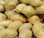 Chinese Roasted in Shell Peanut, Groundnut