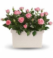 Rose Repose Garden