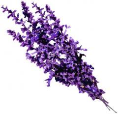 Dried Lavender Florets