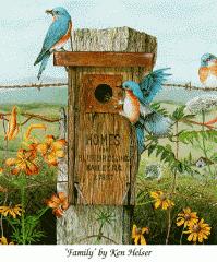 Comederos para aves