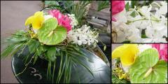 Euro Orchids Arrangement
