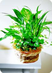Mixed Green Planter