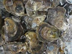 Glidden Point Select Oysters (3-4 inches)