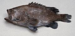 Hapu'upu'u (Grouper)