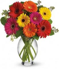 Teleflora's Gerbera Brights Bouquet