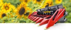 Sonnenblumen-Erntevorsätze