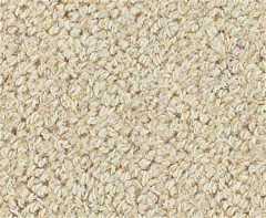 Rainier Snowfield Carpet