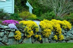 Annuals, Perennials and Ground Cover
