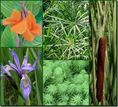 Tropical and Hardy Marginals and Bog Plants
