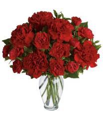 Scarlett''s Rhett Carnations