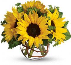 Apollo's Sunflowers