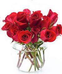 Dozen Premium Morning Dew Red Roses