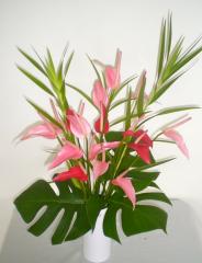 Pink Sunrise Anthurium