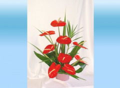 RA9 9 pc. Red Anthuriums