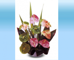 9 pc. Obake Mixed Anthuriums