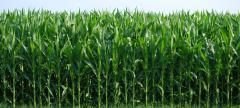 Mechanized Irrigation Solutions