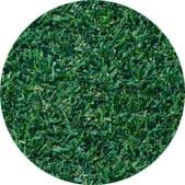 A-G 1 Bermuda Turfgrass