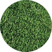 Ballpark Turfgrass
