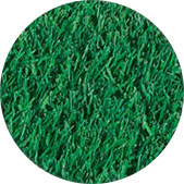 Bluegrass Turfgrass