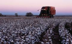 Cotton Express® Cotton Pickers